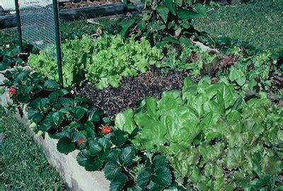 build cheap  productive raised garden beds