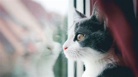 cat wallpaper imgur cat reflection in window download hd wallpapers