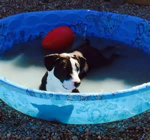 A To From The Adoptable Pets Photo Pool by Anyone A Pogo Stick For Pongo To The Rescue