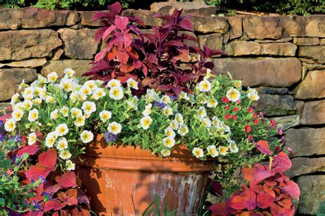 southern living container gardening bright and bold foliage fall container gardening ideas