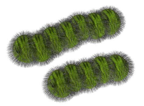 friendly or deadly a truly helpful caterpillar friendly or deadly a truly helpful caterpillar