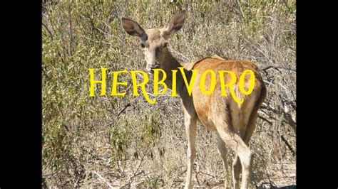 imagenes animales herbivoros carnivoros y omnivoros herbivoros carnivoros y omnivoros diferenciarlos youtube