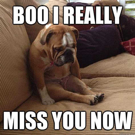 Miss You Meme - boo i really miss you now depressed dog quickmeme