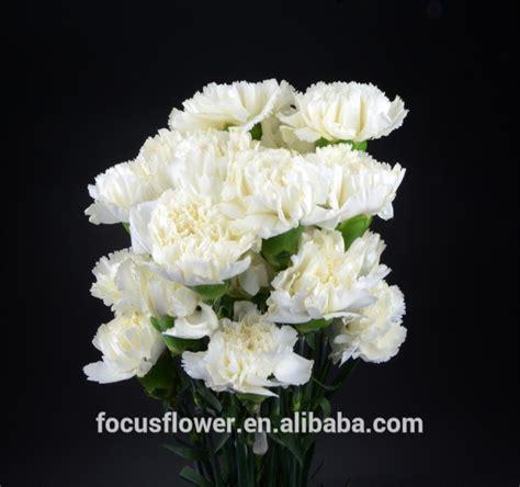 Carnation Grosir Harum Bunga Grenadine Anyelir Grosir Dari Cina Buy