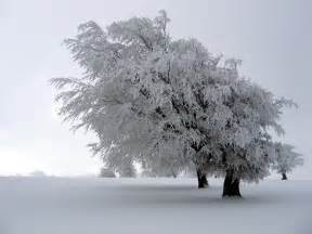 snow covered tree winter photo 575921 fanpop