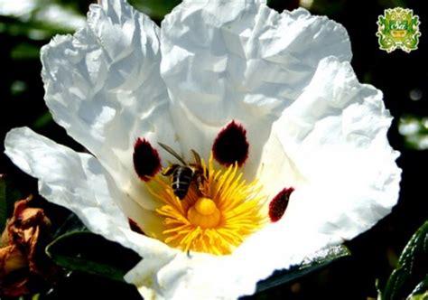 fiore angiosperme morfologia fiore delle piante angiosperme