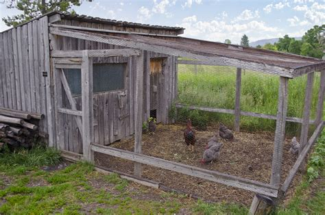How To Raise Pigs In Your Backyard Essential Chicken Coop Parts You Should Know Coops