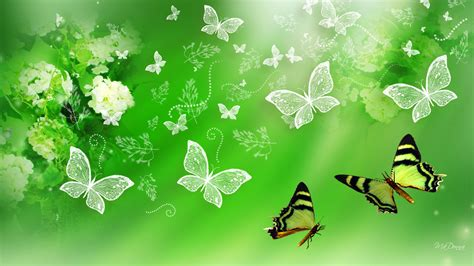 wallpaper green butterfly 1604 green butterfly images wallpaper walops com