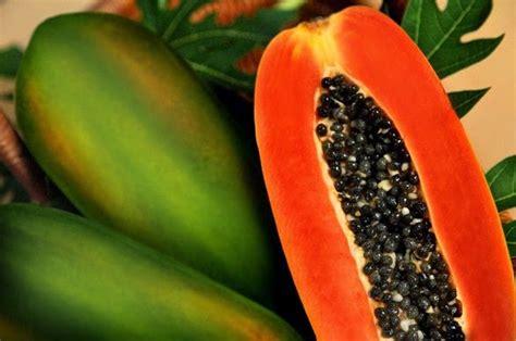 Jepit Rambut Tumbuhan Buah Buahan 11 manfaat pepaya bagi kesehatan dan obat penyakit