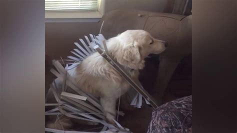dogs getting stuck gets stuck 1funny