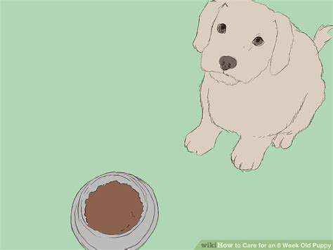 what to feed a 4 week puppy without how to care for an 8 week puppy with pictures wikihow