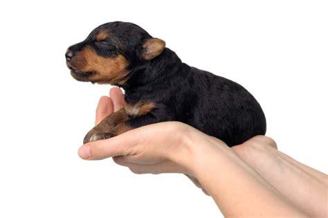 emergency puppy formula whelping supplies slideshow