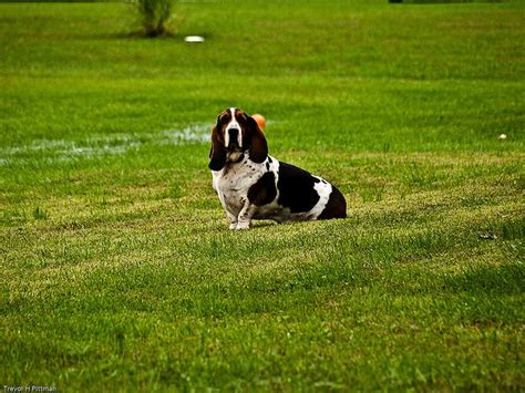 dog in backyard 6 landscaping ideas for a dog friendly backyard by pet palace