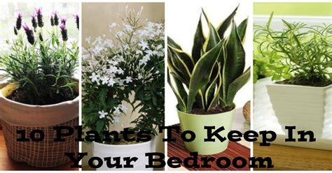 best plants for bedrooms the 10 best plants to have in your bedroom to help you