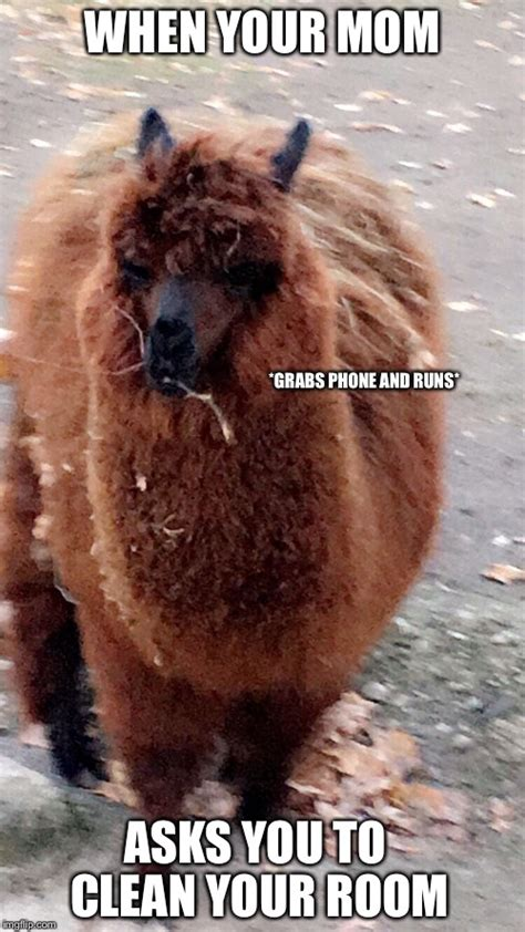 Alpaca My Bags Meme - alpaca my bags meme generator style guru fashion glitz