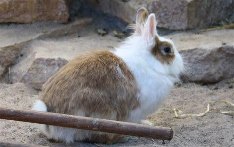 kaninchen haltung wohnung fellpflege bei kaninchen