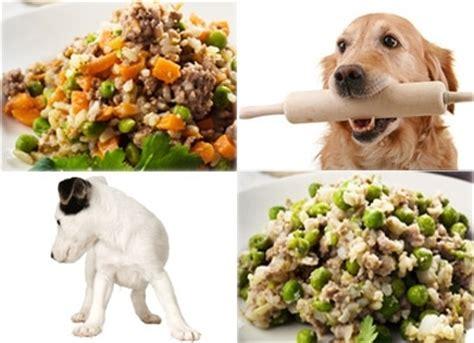 alimenti naturali per cani alimentazione naturale per cani cibo per cani