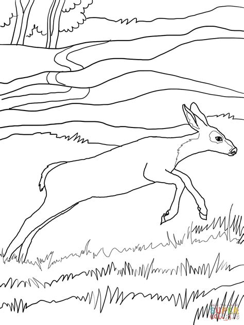 coloring pages of mule deer mule deer baby coloring online super coloring