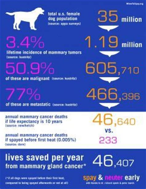benefits of spaying a benefits of cancer and infographic on