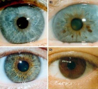 mensajes subliminales ojos verdes resultados las personas de ojos azules aparecieron hace menos de 10