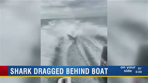 video of shark dragged behind boat shark dragged behind boat youtube