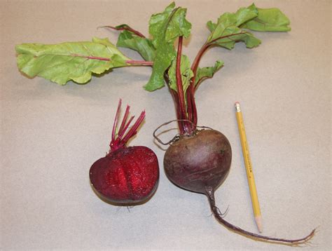 the beet table table beet