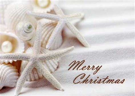 white starfish  shells tropical christmas card  lpg