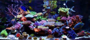 Logo Aquascape Reefkeeping Magazine December 2012 Tank Of The Month