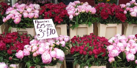 Interior Design Advice peonies amp flower markets this is glamorous