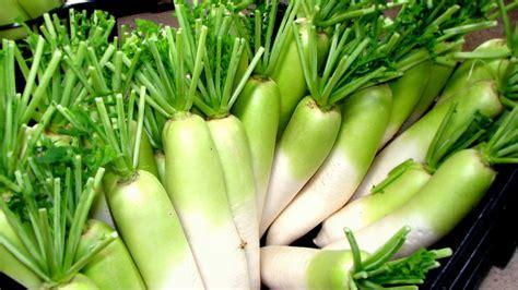 menanam lobak budidaya  olahan tanaman