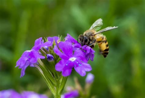 fiori le insetti benefici per il tuo giardino floraqueen italia