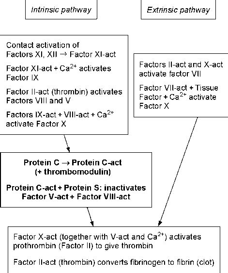 c protein coagulation blood coagulation proteins