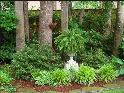 Fern Garden Ideas Fern In Concrete Urn Gardens Gardening And Plants Pinterest Ferns