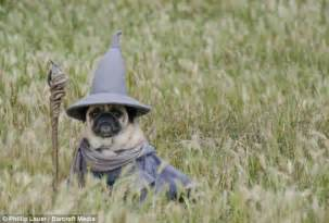 dog owner dresses his pet pugs in hilarious costumes from
