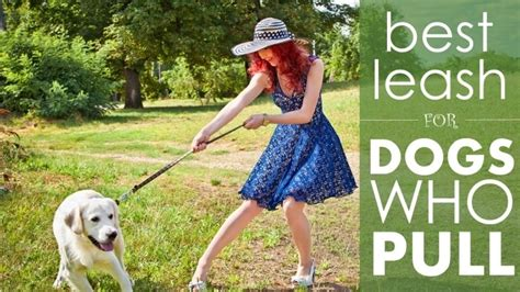 best leash for pulling best leash for dogs that pull 5 great options to in an eager herepup