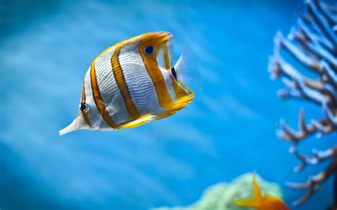 wallpaper for desktop fish beautiful fish wallpapers hd pictures one hd wallpaper