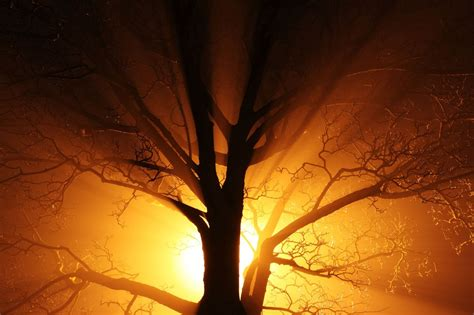trees with orange lights abstract black branch bright mist gold lights