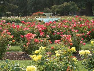 San Jose Botanical Garden San Jose Ca Official Website