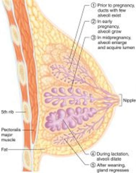 How To Detox Mammary Glands Before Conception by Reproduction System 2 Flashcards Cram