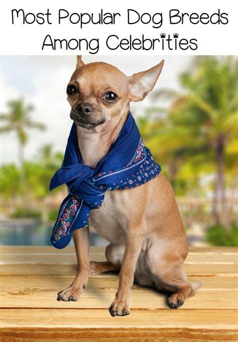 top celebrities dogs top 3 most popular dog breeds among celebrities dogvills