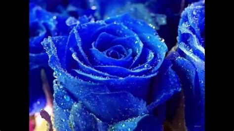 imagenes mas bonitas top 10 flores mas bonitas del mundo top ikerwater youtube