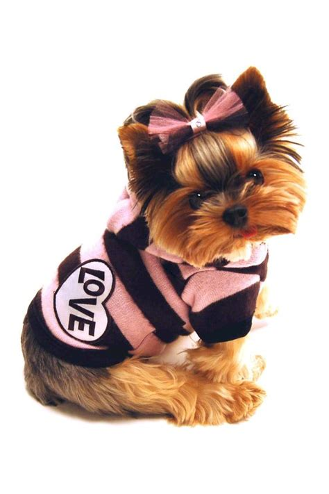 yorkie clothes terrier puppy dogs yorkie puppy clothing dogs in clothes