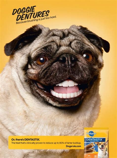 pug with dentures pedigree dentastix quot pug quot publicidad impresa hecho por tbwa chiat day los angeles