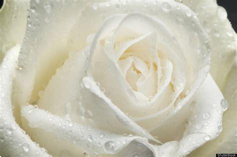 imagenes el blanco d 237 az montero el significado de los colores i blanco