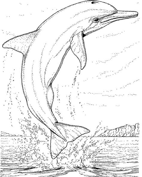 Dolphin Coloring Pages Coloringpages1001 Com Dolphin Coloring Pages Free