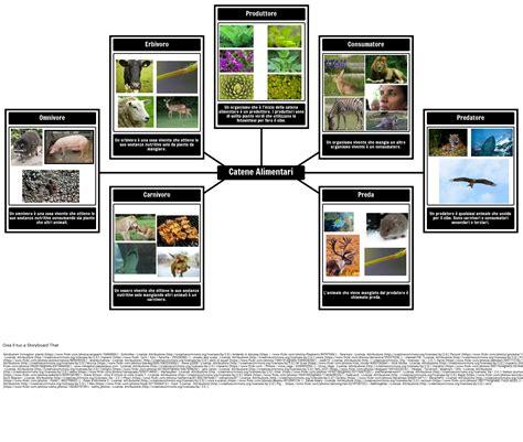 esempio di catena alimentare esempi catena alimentare catena alimentare definizione e