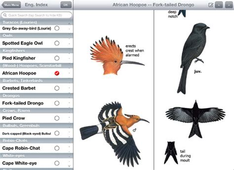 names of different types of individual by african south african birds names www pixshark com images
