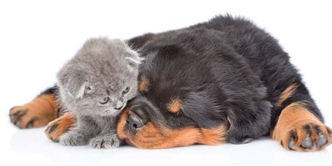introducing a new puppy to your current 9 tips for introducing a new when you already pets top tips
