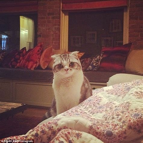 taylor swift cat advertisement taylor swift shares video of her new kitten sleeping while
