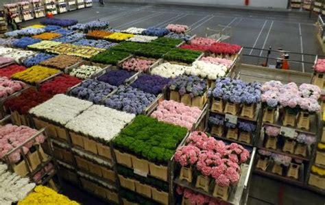 aalsmeer mercato dei fiori asta dei fiori picture of floraholland aalsmeer